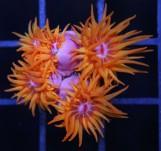 NPS кораллы