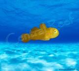 СКИДКА 5%!!! Paragobiodon xanthosomus - Коралловый гобиодон ксантосомус M